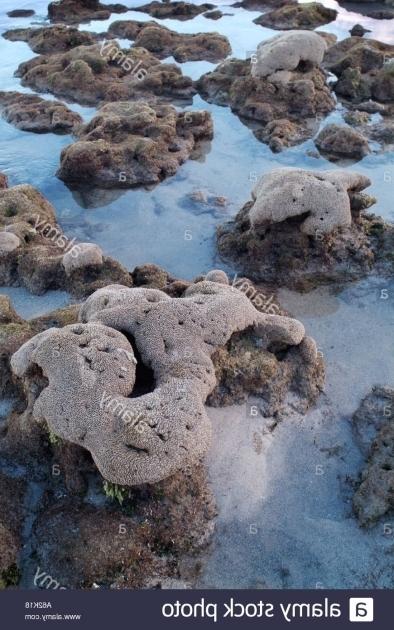 Remarkable Bathtub Reef Beach Bathtub Reef Beach Stock Photos Bathtub Reef Beach Stock Images