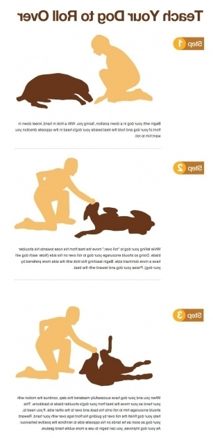 Amazing Dogs In A Bathtub Position 488 Best Dog Stuff Images On Pinterest