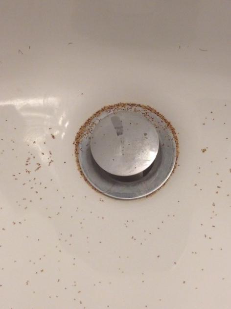 Image of Water Coming Up Through Bathtub Drain Whats This In My Bathroom Sink Almost Every Morning