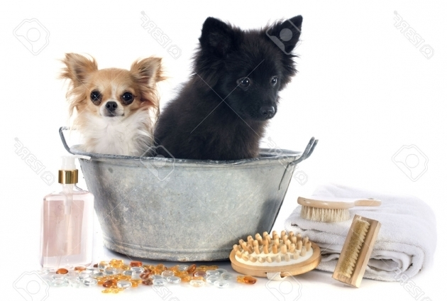 Picture of Dog In A Bathtub Dog Bath Stock Photos Images Royalty Free Dog Bath Images And