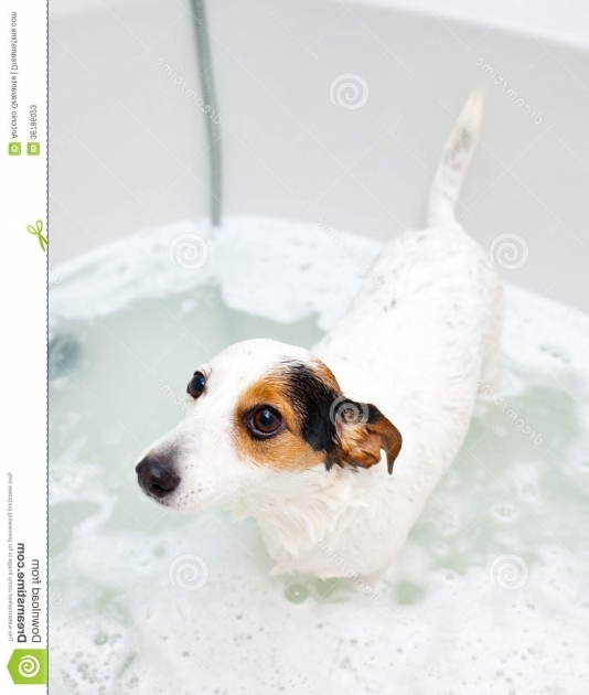 Remarkable Dog In A Bathtub Dog Taking A Bath In A Bathtub Stock Photos Image 36786023