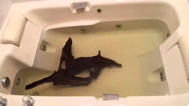 Alluring A Fish In The Bathtub Clean Wash Driftwood For Fish Aquariums In Bath Tub Youtube