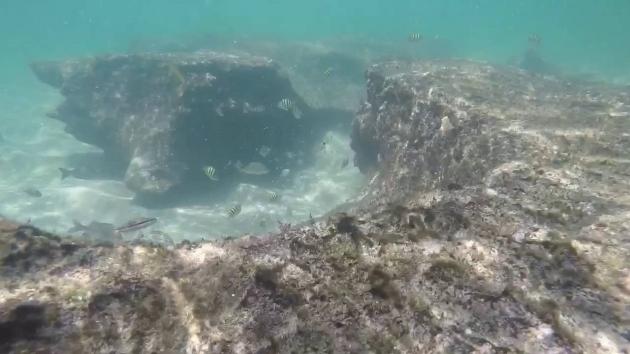Alluring Bathtub Reef Beach Snorkeling Backside Bathtub Beach Reef Florida Youtube