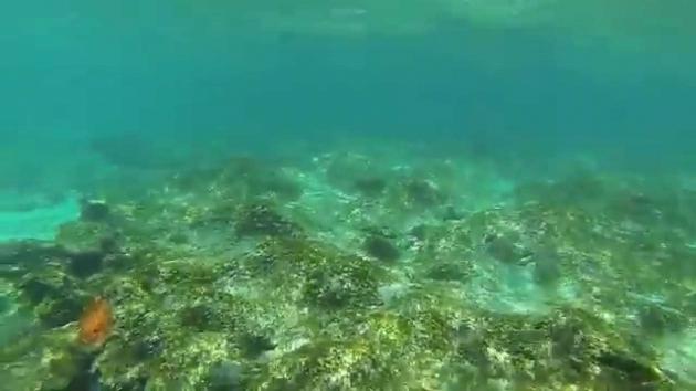 Alluring Bathtub Reef Beach Snorkeling With Sea Turtle At Bathtub Beach Fl Youtube