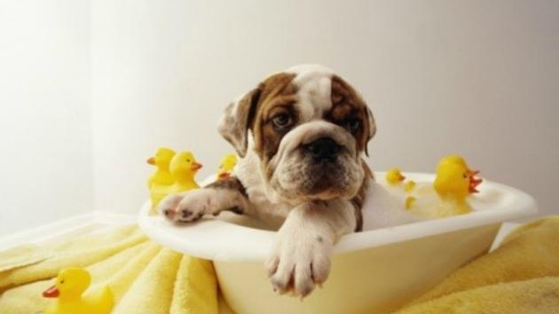 Stunning Dog In A Bathtub Bathing Your Dog In The Bathtub Noten Animals